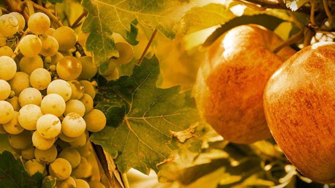 Outono dourado para empresários